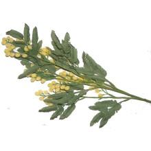 Branche acacia