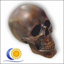 Crâne GM Cabinet de reflexion